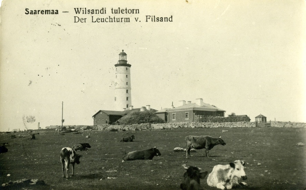 Vilsandi fire tower , view from the southeast, cows on the ground
