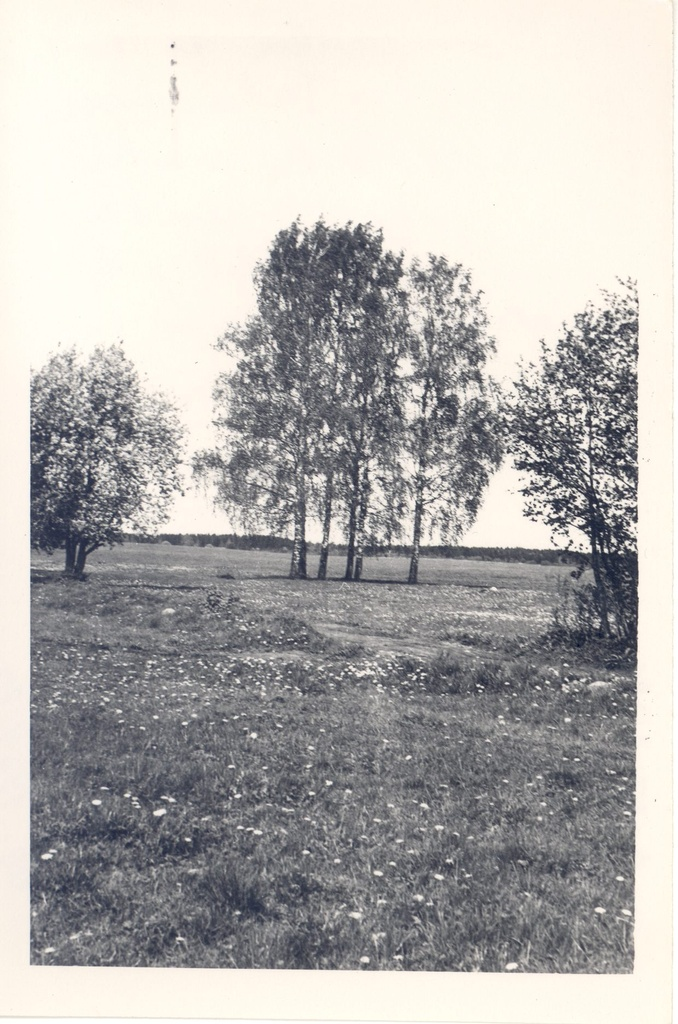 [Born Height,Ed. (Brunberg, Ed.] Prunni farm itself. Location Paide raj. Valasti village. The farm was located between two cassettes, which Jaan Brunberg planted.