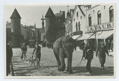 Tallinn, elephant on Viru Street.  duplicate photo